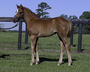 Journeyman , Winslow Homer 2015 foals, Ma'am Maw 2015 filly, Speaking Roll 2015 colt; Sanibel Soul 2015 filly