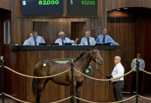 Hip 151 C. Khozan-One to Five sold for 82,000.00  at OBS October 2018