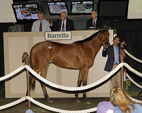 $230,000 Barretts May Sale Topper