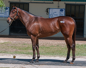Hip 445, a filly by JP's Gusto, sold for $67,000 to Big Chief Racing.